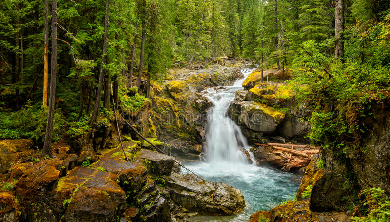 Waterfall in the forest, Mount Rainier National Park stock photos