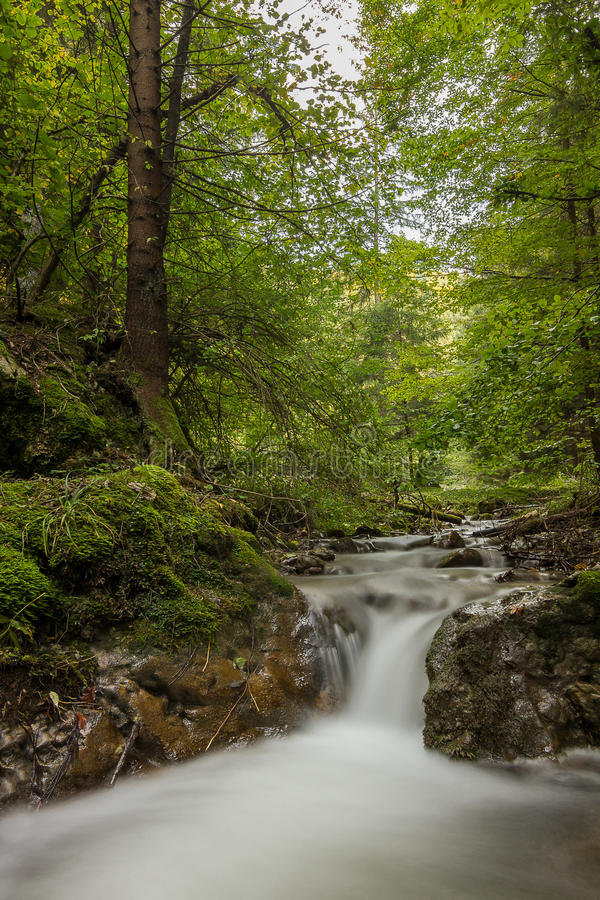 Download Waterfall in the forest stock photo. Image of down, evening - 34529492