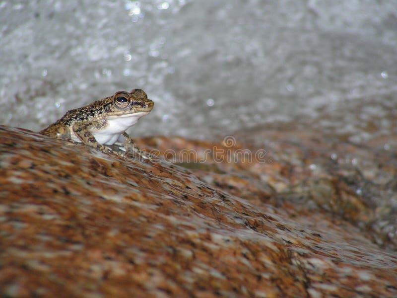 Waterfall  frog stock photos