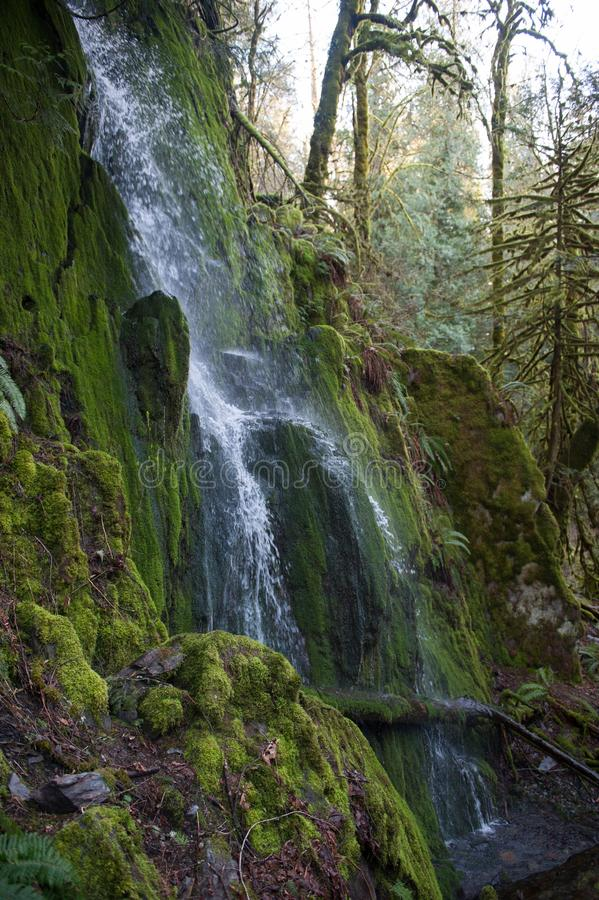 Waterfall In Goldstream Park on Vancouver Island royalty free stock photos