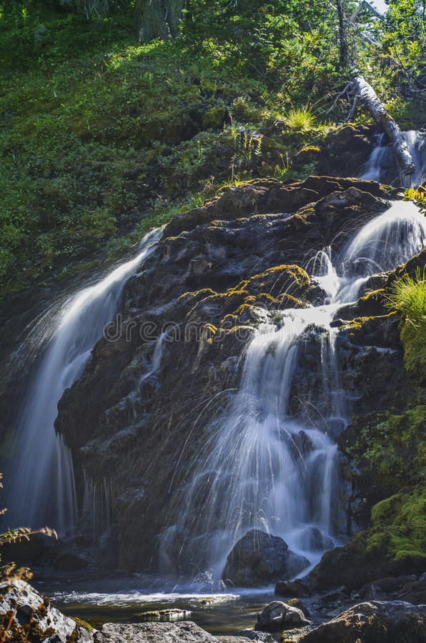 Waterfall on Grand Creek in Olympic National Park, Washington state. Water fall fed by Moose Lake along Grand Creek in Olympic National Park in the Pacific royalty free stock photography