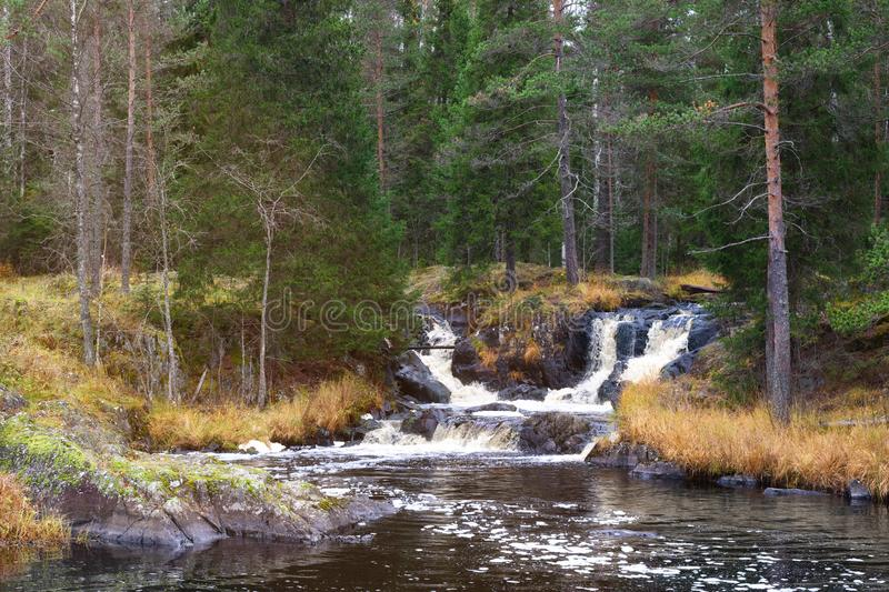 Waterfall green forest river stream landscape.  royalty free stock images