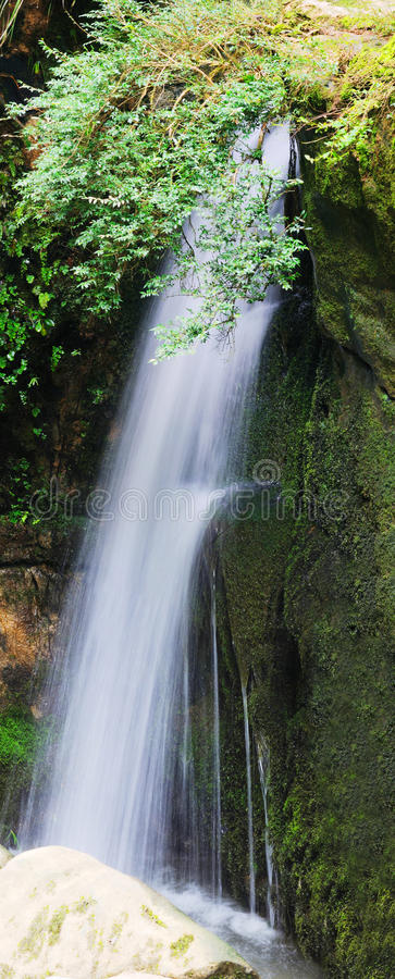 Download Waterfall And Green Leaves Royalty Free Stock Image - Image: 20314446