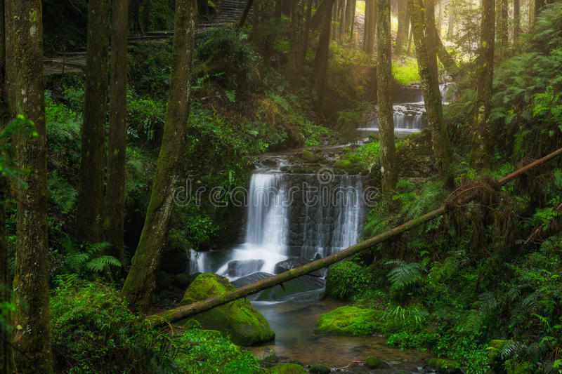 Waterfall with a green path in Alishan National Scenic Area. Chiayi Province, Taiwan stock photos