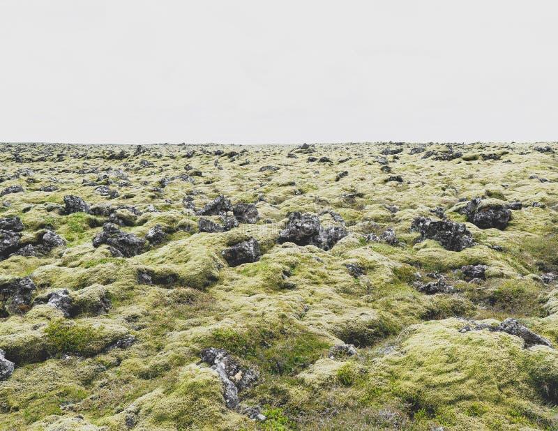 lava vulcanic area moss ICELAND stock image