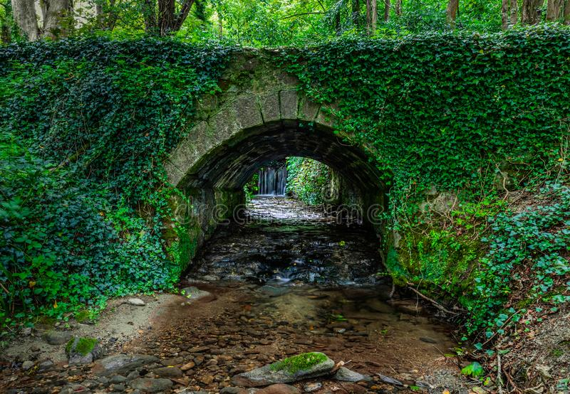 Waterfall View Through an Ivy-Covered Tunnel Under a Bridge stock image