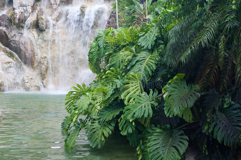 Waterfall in the Jardin Botanique de Deshaies, Guadeloupe island royalty free stock image