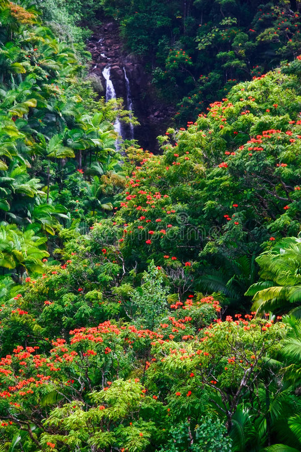 Waterfall In Jungle Of Hawaii Royalty Free Stock Images