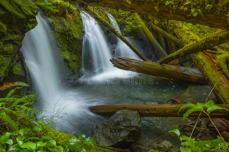 Waterfall at Murhut Creek in Olympic National Forest in Washington state. Water rushes over rocks at the Beautiful lower Murhut Falls in Olympic National Forest royalty free stock image