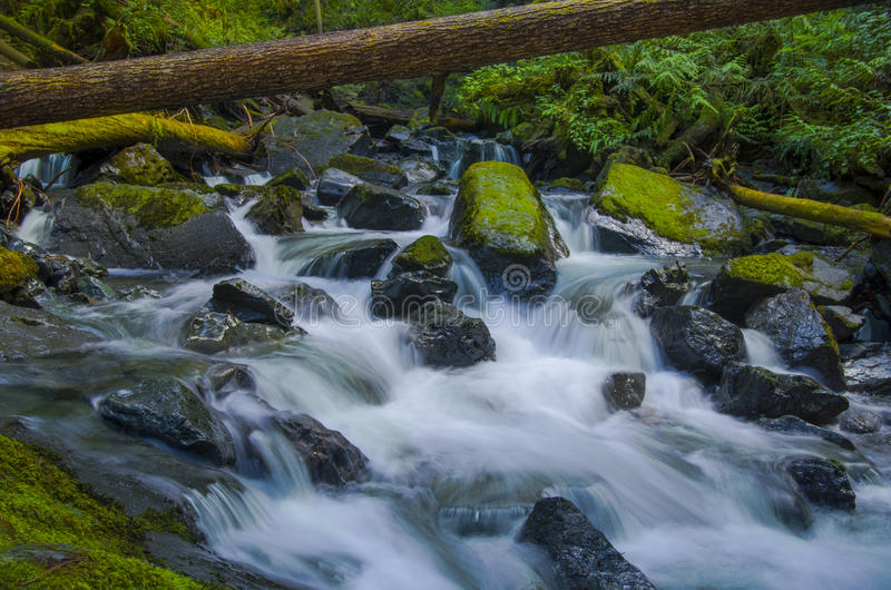 Waterfall at Murhut Creek in Olympic National Forest in Washington state. Water rushes over rocks at the Beautiful upper Murhut Falls in Olympic National Forest royalty free stock photos