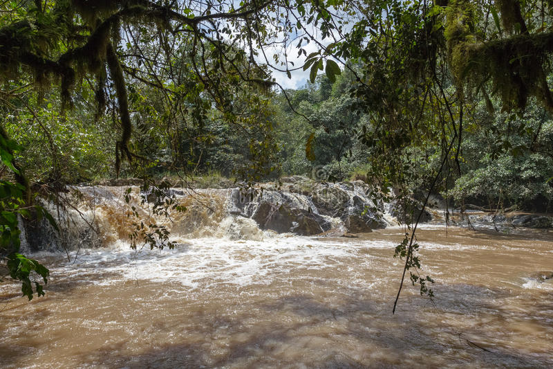 Very fast river in Kakamega Forest. Kenya, Africa. Fast river in Kakamega Forest. Kenya, Africa royalty free stock photography
