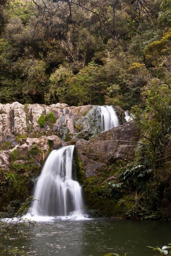 Download Waterfall In New Zealand Bush Stock Photo - Image of twin, vegetation: 21533112