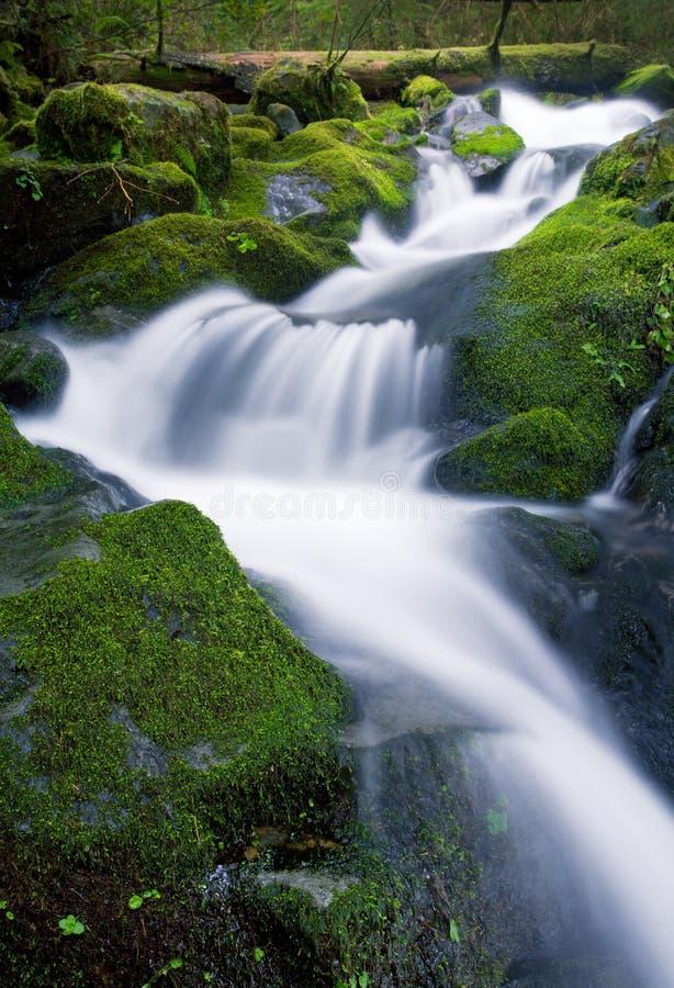 Waterfall, Olympic Ntl. Park Stock Photos