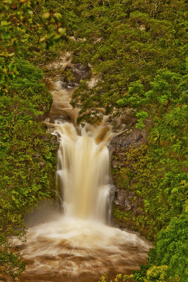 Download Waterfall in a rain forest stock photo. Image of mountain - 12208574