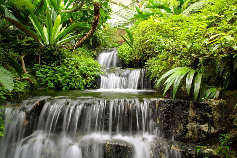 Waterfall in the Rain Forest. Image of peaceful waterfall in the rain forest