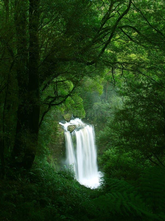 Waterfall In Rainforest, Victoria Stock Photo