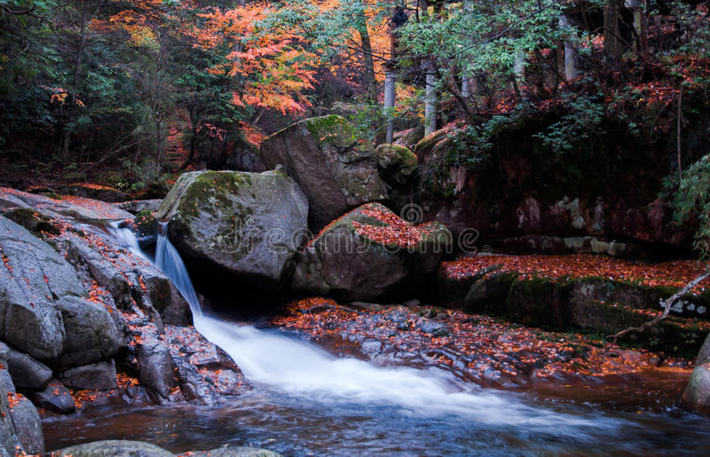 waterfall and red autumn leaves stock image