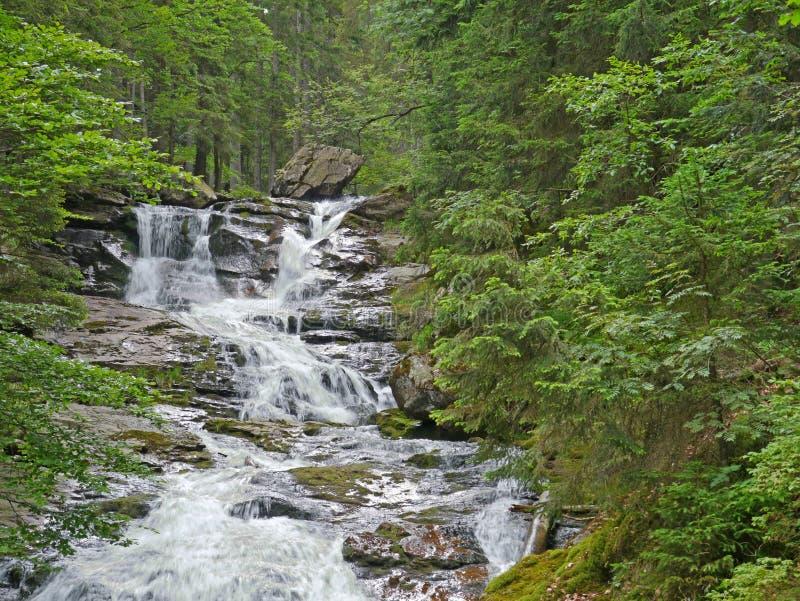 Waterfall Riesloch, δασική πέτρα massif στοκ φωτογραφία