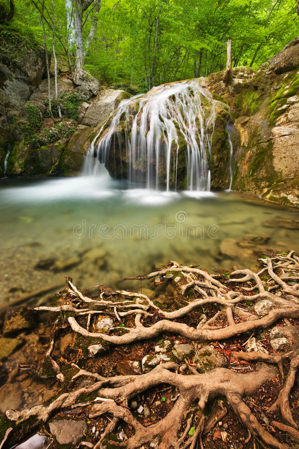 Download Waterfall and roots stock photo. Image of djur, mountain - 12566196