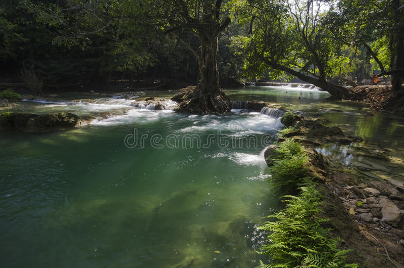 Download Waterfall scene stock photo. Image of creek, stream, rainforest - 36188214