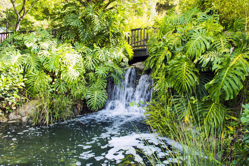 The waterfall stock photography