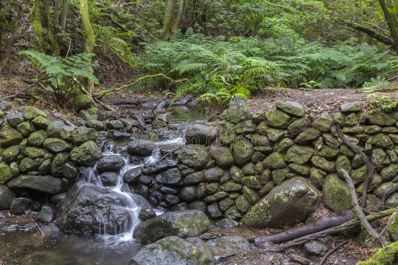 Waterfall and stone wall with moss in forest at Garajonay park. La Gomera, Canary Islands. Spain stock photo