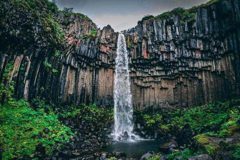 Waterfall Surrounded With Green Leaf Plant View royalty free stock images