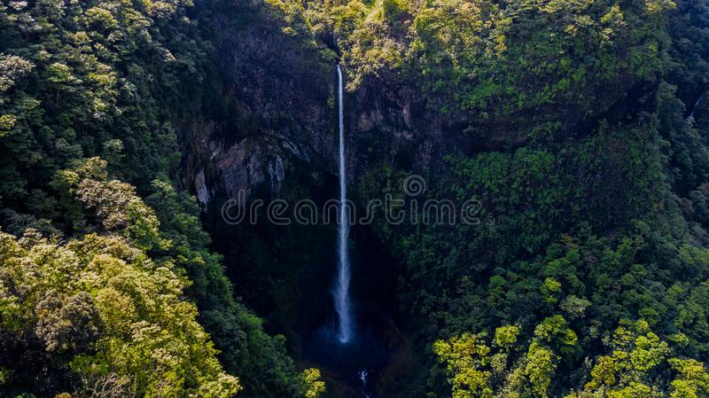 Waterfall Surrounded by Green Leaf Trees at Daytime royalty free stock photos