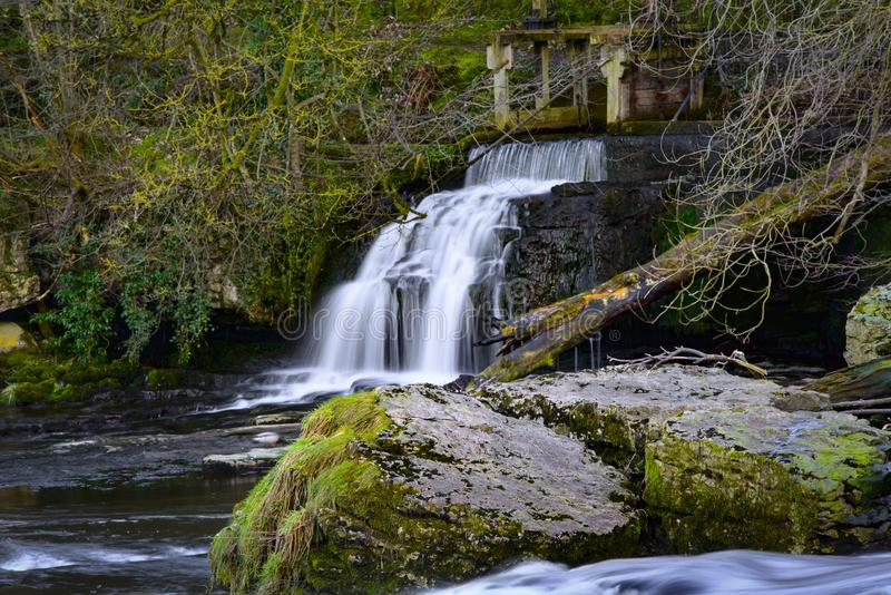Waterfall Surrounded by Plants stock photography