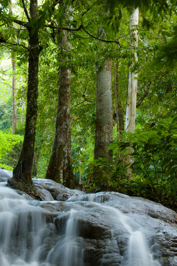 Waterfall in Thailand forest stock photos