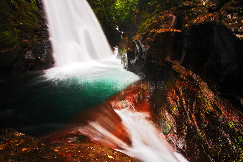 Waterfall in the tropic forest. La Paz Waterfall gardens, with green tropical forest, Central Valley, Costa Rica. Waterfall in the royalty free stock photo