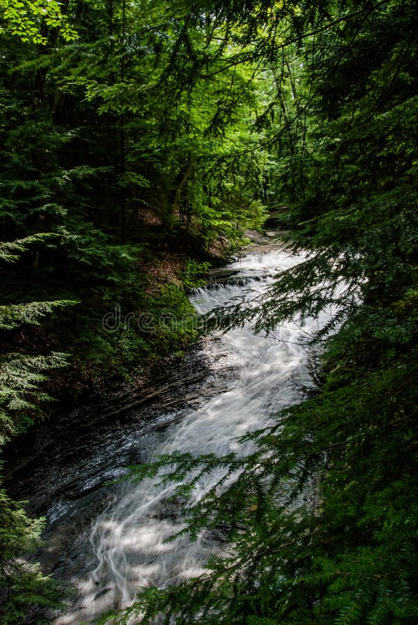 Waterfall winding through the forest. Of pines stock images