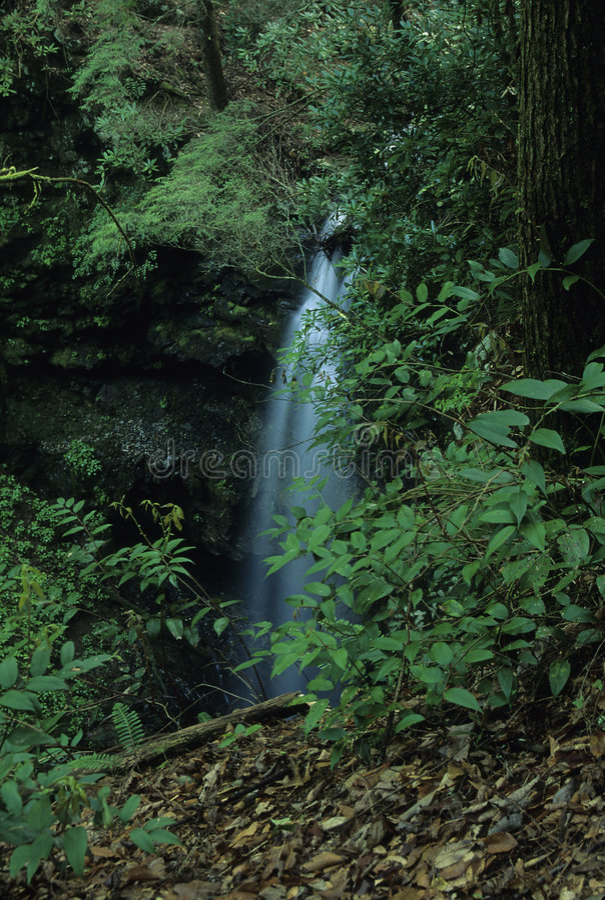 Waterfall, WO Sink, Smokies royalty free stock photos