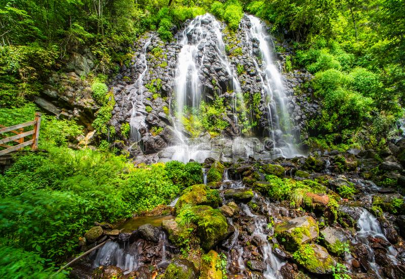 Waterfalls in dense forest. Beautiful waterfall with clear water among dense forest stock photos
