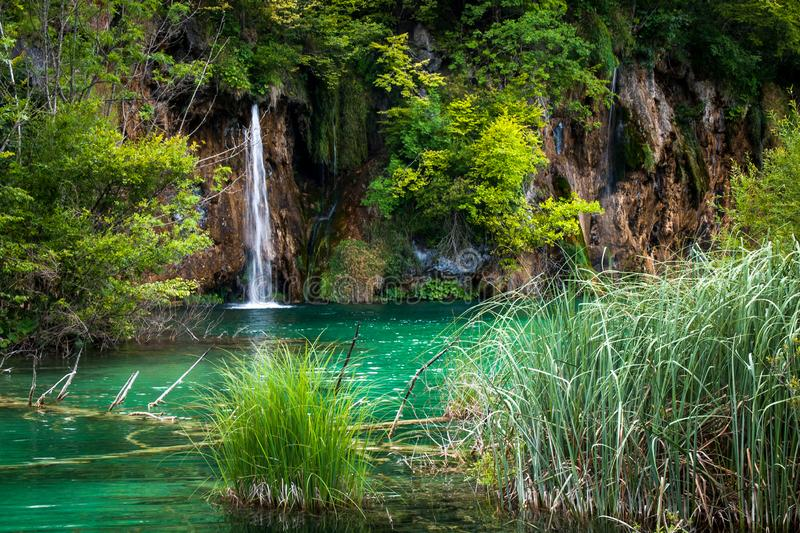 Beautiful Waterfalls, Plitvice Lakes, National Park, Forest, Croatia. Waterfalls in National park of Plitvice Lakes situated in Northern Croatia. Picture was royalty free stock photos