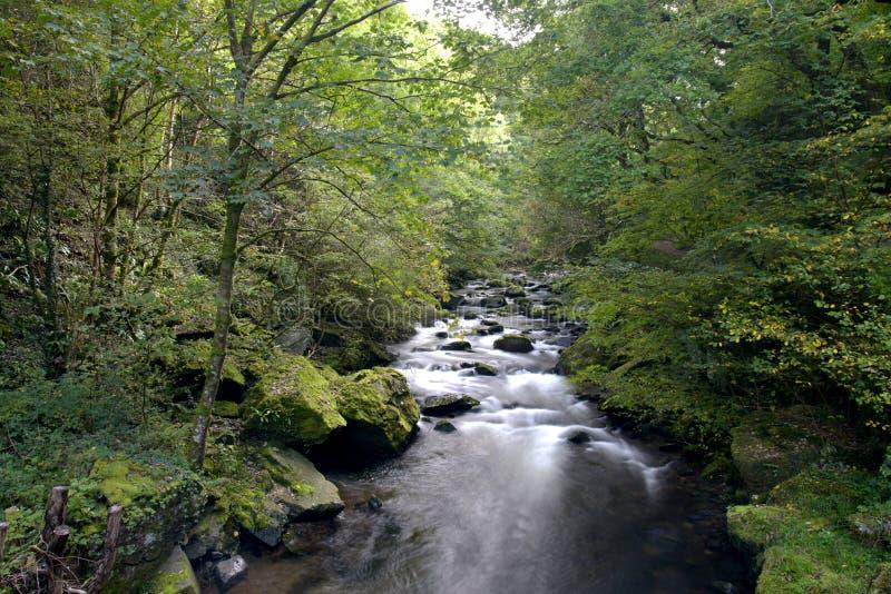 Waterfalls at Watersmeet, Lynmouth, Exmoor, North Devon. Waterfalls running beneath trees at Watersmeet, Lynmouth, Exmoor, North Devon stock images