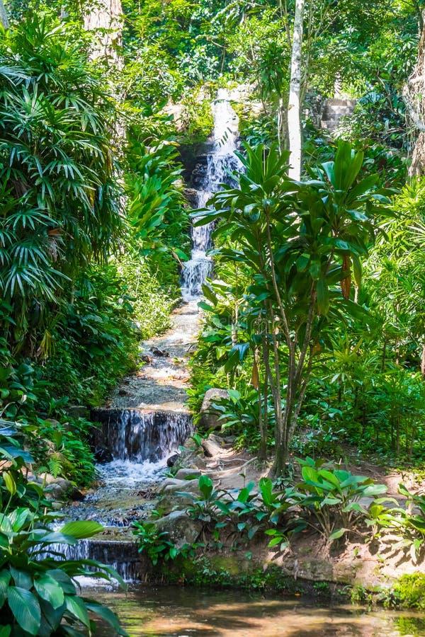 Waterfountain - Botanic Garden Rio de Janeiro, Brazil. Waterfountain inside Botanic Garden Rio de Janeiro, Brazil royalty free stock photography