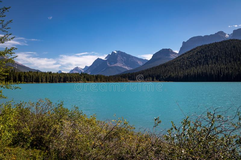 Looking South at Waterfowl Lake, glacier fed lake in the Canadian Rockies - off the Icefield Parkway, Canada royalty free stock image
