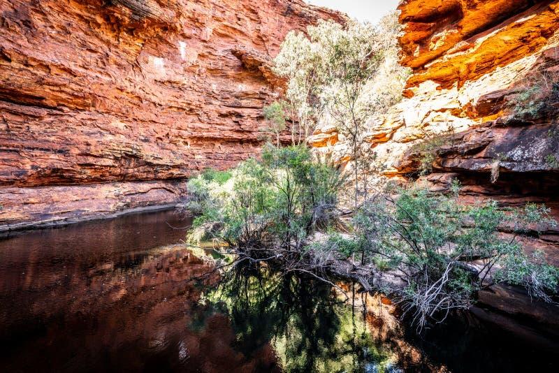 waterhole的看法在伊甸园里Canyon国王的在澳洲内地澳大利亚 图库摄影