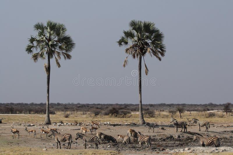 waterhole άγρια φύση στοκ εικόνα με δικαίωμα ελεύθερης χρήσης