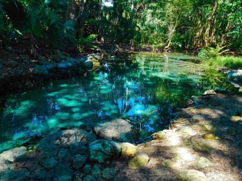 waterhole fotografia stock