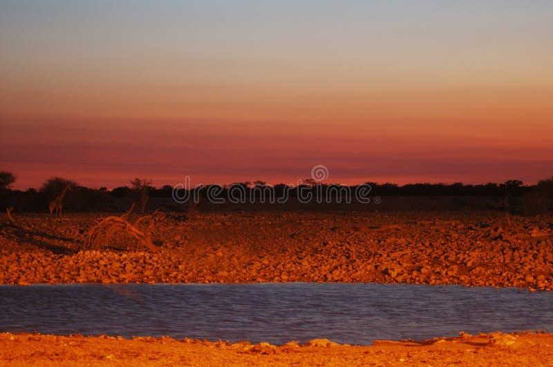 Waterhole en Etosha imagen de archivo