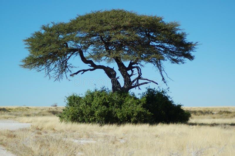 Download Waterhole för etosha 2 arkivfoto. Bild av savanna, öken - 238114