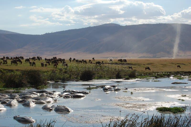 Waterhole ngorongoro lizenzfreie stockbilder
