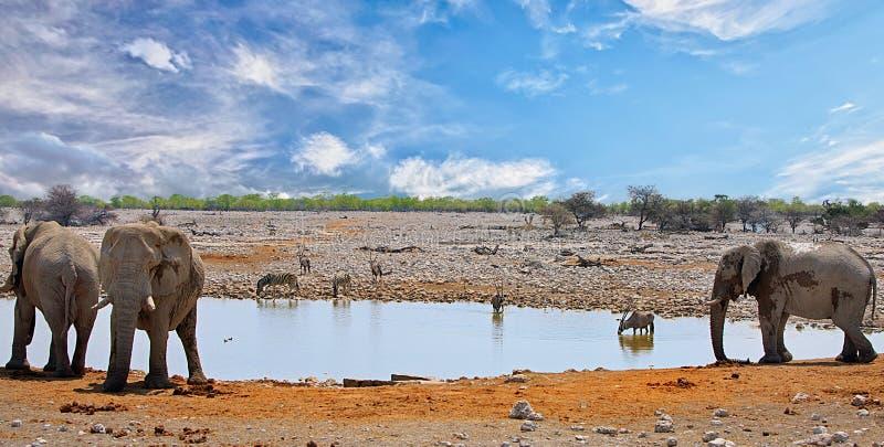 Waterhole vibrante em Etosha com elefantes, oryx e zebra contra um céu nebuloso azul foto de stock