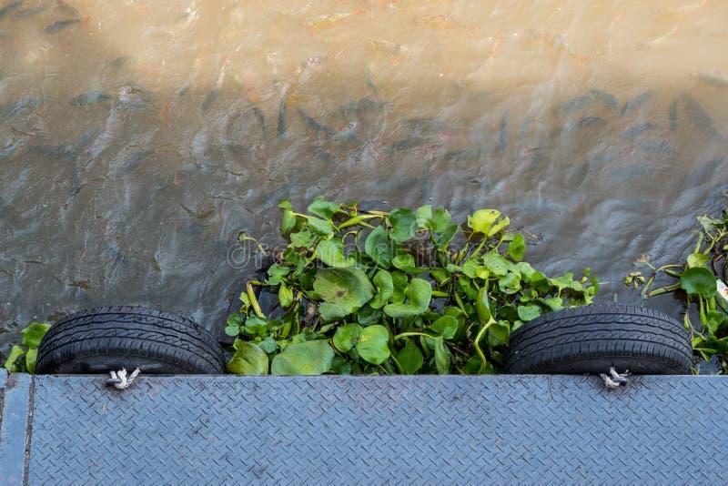 Waterhyacint in de rivier met menigte van vissen stock foto