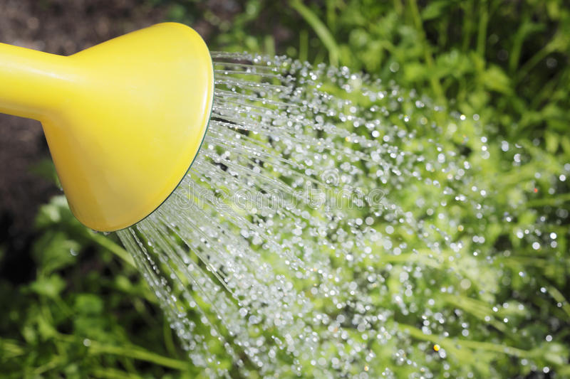 Watering. Spout of a watering can and water stock image