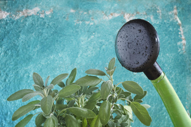 Download Watering Can Stock Photo - Image: 17426280