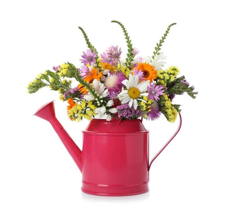 Watering can with beautiful wild flowers. On white background stock photos