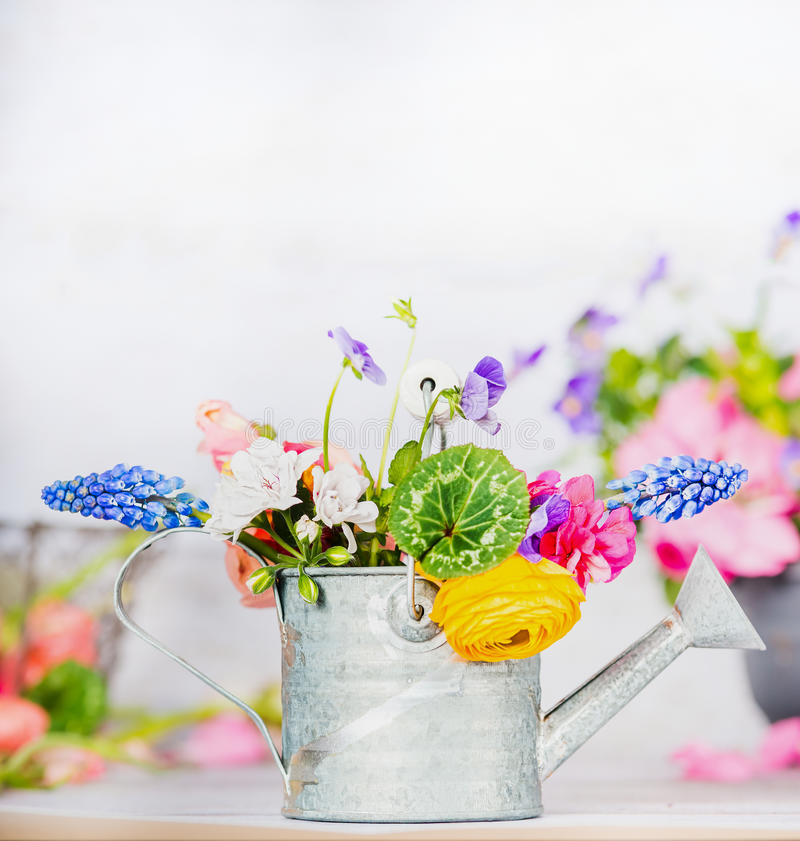Watering can with colorful garden flowers on table, front view, gardening. Concept stock images